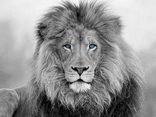 VYQDTNR Canvas Prints Print Artwork Black and White Blue Eyed Lion Wall Art Picture Pictures Painting On Canvas Modern Home Office Decor
