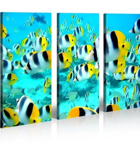 islandburner Bild Bilder auf Leinwand Doktorfische Aquarium XXL Poster Leinwandbild Wandbild Art up Your Life ®