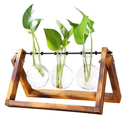 Desktop Plant Terrarium Zwiebel Vase Glas Pflanzer Vermehrungsstation Transparente Vase Kreative Hydroponik Glas Transparente Vase Zwiebel Vase mit Holzständer Dekorative Pflanze Terrarium (3 vase)