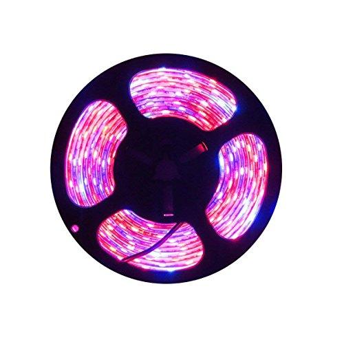 Tesfish LED planta crecer tira luz DC 12V IP65 espectro completo SMD 5050 rojo azul 4: 1 cuerda luz para acuario Invernadero plantas