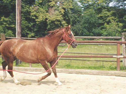 Bodenarbeitsseil 3,2 m| Bodenleine | Führseil mit Bull Snap | Pferdeausbildungsstrick | Western Rope für Horsemanship und Bodenarbeit weiß/schwarz - 2