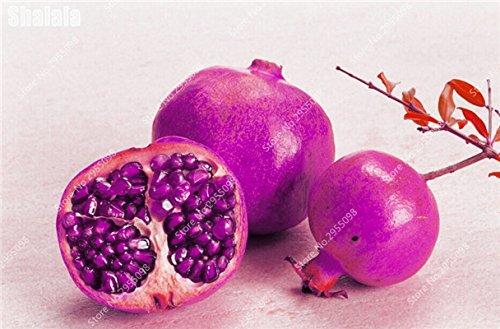 30pcs/sac Heirloom Seeds grenade vivace géant non-OGM bio Succulent Bonsai Jardin Arbre Plante en pot pour Flower Pot 9