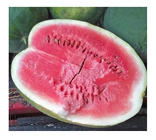 Black Diamond Heirloom Watermelon Seeds - Produces Watermelons up to 50 Pounds!