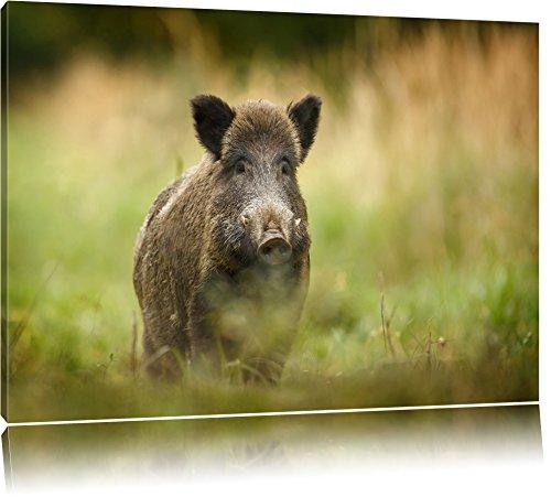 Stolzes Wildschwein im Wald Format: 100x70 auf Leinwand, XXL riesige Bilder fertig gerahmt mit Keilrahmen, Kunstdruck auf Wandbild mit Rahmen, günstiger als Gemälde oder Ölbild, kein Poster oder Plakat