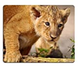 Lion Cub Walk Curiosity Predator Mouse Pads Customized Made to Order Support Ready 9 7/8 Inch (250mm) X 7 7/8 Inch (200mm) X 1/16 Inch (2mm) Eco Friendly Cloth with Neoprene Rubber Liil Mouse Pad Desktop Mousepad Laptop Mousepads Comfortable Computer Mouse Mat Cute Gaming Mouse pad