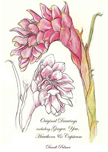 Original Drawings including Ginger, Yew, Hawthorn & Capsicum (Sketchbook Art) (English Edition)