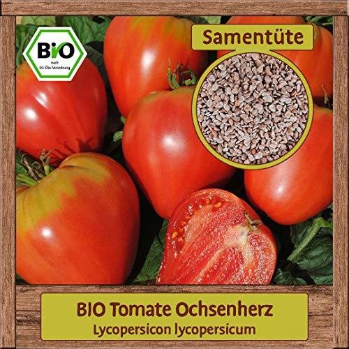 Samenliebe BIO Gemüse Samen Tomaten Ochsenherz (Lycopersicon lycopersicum) | BIO Tomatensamen Gemüsesamen | BIO Saatgut für 15 Pflanzen