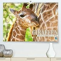 Giraffen: Schlanke Schoenheiten aus Afrika (Premium, hochwertiger DIN A2 Wandkalender 2022, Kunstdruck in Hochglanz): Tiere mit Weitblick: Netzgiraffe, Massai Giraffe, Rothschild Giraffe (Monatskalender, 14 Seiten )