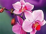 Fiore 5D fai da te ricamo orchidea mosaico strass kit di attrezzi punto croce artigianato decorazione della casa pittura diamante A4 50x70 cm