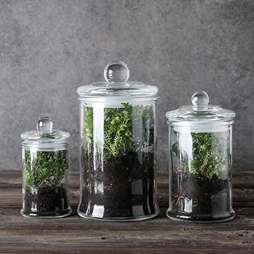 Mini Glass Apothecary Jars-Cotton Jar-Bathroom Storage Organizer Canisters Set of 4