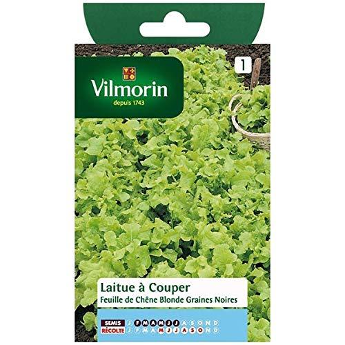 Vilmorin - Sachet graines Laitue à couper Feuille de Chêne blonde graines noires
