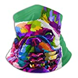 Wfispiy Sport Bandana Bulldog francés en Colores Pop Art aislados en la máscara Facial Protección UV Polaina de Cuello Delgado