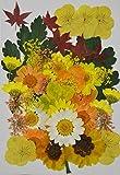 HANDI-KAFU Gelb Viola, Hortensie, Maple Leaf, husarenknöpfe Echten gepressten Getrocknete Blumen