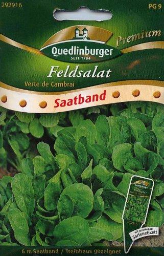 SB Feldsalat, Verte de Cambrai