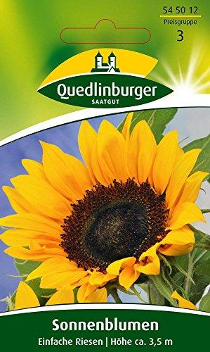 Sonnenblume Einfache Riesen von Quedlinburger Saatgut