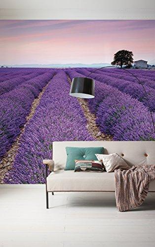 Komar 036-DV3 Vlies Fototapete Provence Tapete, Wand Dekoration, Lavendel, Blüten, Landschaft, Natur-036-DV3, lila, 300 x 250 cm (Breite x Höhe)