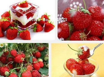 500 fraîchement cueillies Graines Juicy Alpine White Strawberry vivaces Fruits semences VC Easy Care ``
