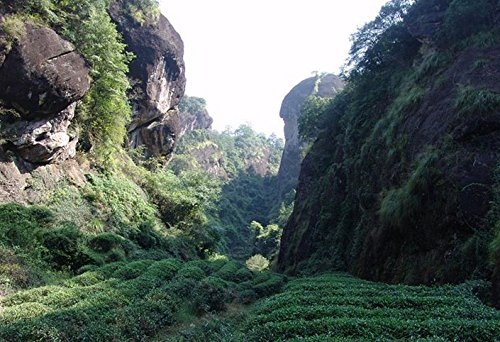 Top Organic Handmade Da Hong Pao Chinese Oolong Tea 200g