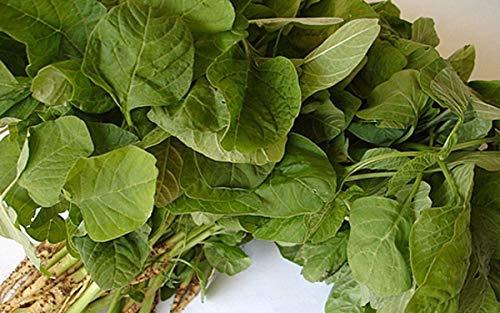 Green Amaranth Round Leaf Seeds - Harvested 30 days after sowing! Very Tender!!!(100 - Seeds)