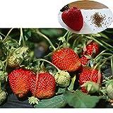 maritown semi di fragola per coltivare, facile e veloce coltivare le piante frutta in vaso da mangiare per la casa fattoria cortile giardino balcone 500 semi(strawberry)