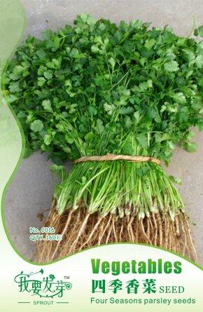 10 paquets d'origine, 160 graines / paquet, frais Caraway Herb Graines