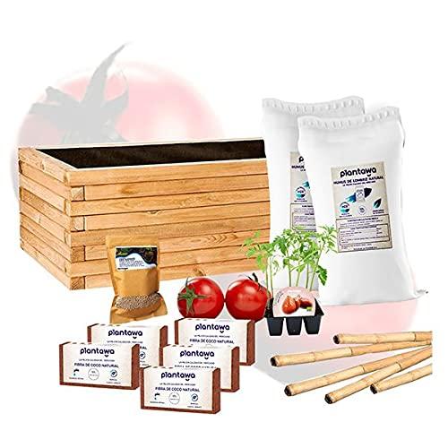 Tomaten-Anzucht-Set mit Blumenkasten 80...
