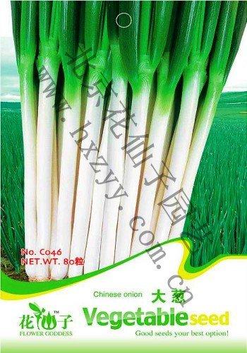 SVI (Mix ordre minimum $5) 1 Original Lot 80 pcs chinois d'oignon Graines Légumes Graines
