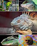 2020 -2021 18 Month Weekly and Monthly Planner July 2020 to December 2021: Lizard Collage - Monthly Calendar with U.S./UK/ ... Reptiles & Amphibian Animal Nature Wildlife
