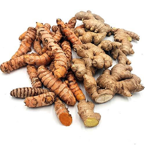 Kurkuma Bio + Ingwer Bio je 300 g: Kurkumaknollen und Ingwerknollen frisch aus Peru | frische Kurkumawurzel + Ingwerwurzel | echter Kurkuma + echter Ingwer ungezuckert | Fresh Tumeric + fresh Ginger