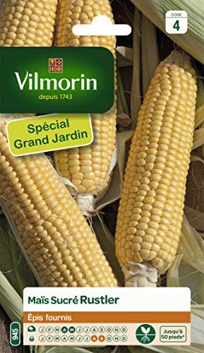 Vilmorin - Maïs sucré Rustler - Épis fournis - goût doux et sucré -adapte à la congelation après blanchiment - rendement jusqu'à 50 pieds