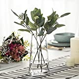 """FUNSOBA Moden Trapezoid Glass Vase with Gold Mouth for Centerpieces Home Wedding Decoration (Clear 4.7""""x 8.7')"""