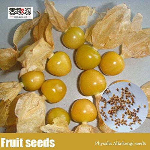 100pcs facilement identifiables Physalis alkekengi graines, fruits, lanterne chinoise herbacé plantes vivaces d'hiver cerise Graines