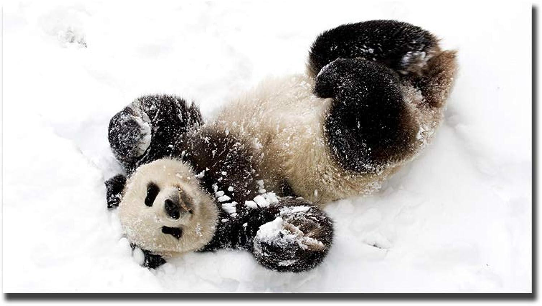 mejor precio HPCAGLL HPCAGLL HPCAGLL 5D Pintura Diamante Conjunto DIY Escena de la Nieve, Panda Gigante, Lindo bebé, Animal, Lindo Punto de Cruz Arte artesanía Etiqueta de la Parojo decoración  muy popular