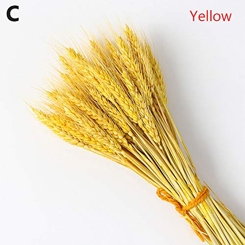 Wanshe 50 Pcs Dried Wheat Stalks,Olden Natural Dried Wheat Sheaves Fall Wheat Bouquet Flower,Bundle Dried Wheat Length 45cm,for Home Decor(Yellow)