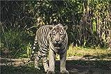 White Tiger Animal 3D Rompecabezas Brain Teaser Puzzle-Iq Inteligencia Juguete Educativo-Juego Niños Y Adolescentes