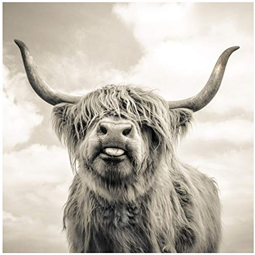 YANGMENGDAN Druck auf leinwand schwarz und weiß Highland Cow Cattle Wand leinwand Kunst Nordic malerei Poster und Druck skandinavischen wandbild für Wohnzimmer 70x70cmx1 stück kein Rahmen