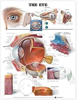 Best optometry gifts uk Reviews