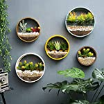 ZEETOON 3 Pack Set Modern Wall Planters Succulent Planter Circle Metal Flower Pot Indoor Air Plant Vertical Container Hanging Vase Home Decoration Size S,M,L Black, with 3 Artificial Succulent Plants 11 MATERIAL: Stabilized iron alloy metal with powder coating ensures long lasting color and withstands extreme weather conditions. Tempered and limpid glass feasts your eyes, add visual intrigue to this wall hanging. Do not rust and no unpleasant smell. PLANTS: Great for succulent plants, air plant, mini cactus, faux plants, artificial plant. It also works for mint, herbs, basil, ivy, flowers, climbing plants, evergreens. The possibilities are only limited by your imagination; display them in a wall hook plant holder, a wall mount, a geometric glass vase, or even in a live wreath. They can even make the perfect desk centerpiece for your office. IDEAL: ZEETOON Wall Vase Perfect for displaying your favorite hanging plants, this wall holder is a basic piece that will fit perfectly anywhere. Outdoor or indoor, kitchen, bedroom, great garden shed decor, farmhouse style wall decor, front entry way, or mounting on bathroom.