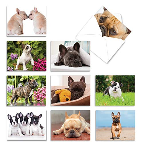 The Best Card Company - 10 Adorable Blank Dog Cards (4 x 5.12 Inch) - Pet Dog Breed Assortment, Boxed - Beautiful Bulldogs AM6298OCB-B1x10