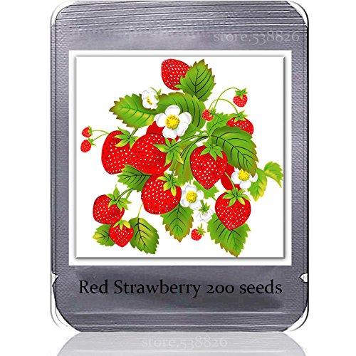 Heirloom Sweet Red Strawberry Big Fruits Graines, 200 graines, savoureux juteuse TS215T plante bonsaï