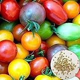 ypypiaol 300 Unids Color Brillante Semillas De Tomate Cereza Deliciosas Vegetales Frutas Jardín Planta Al Aire Libre Semillas de tomate