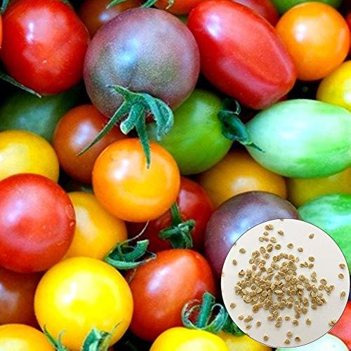 Catkoo 300 Piezas De Semillas De Tomate Cherry De Color Brillante Deliciosa Planta De Jardín De Frutas Vegetales, No Transgénicas, Ricas En Vitamina C Semillas de Tomate