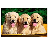 AFFICHE Animaux Mignon A3 Poster (Chiots (Puppies))