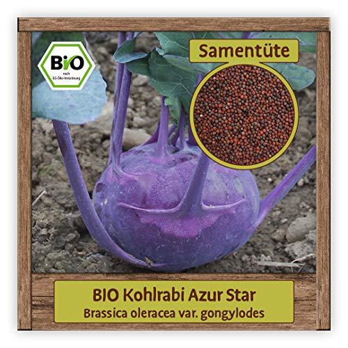 BIO Kohlrabi Samen Sorte Azur Star (Brassica oleracea) Gemüsesamen Kohlrabi Saatgut