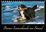 Berner Sennenhunde am Strand (Tischkalender 2017 DIN A5 quer)