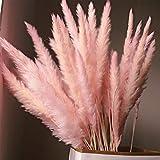 15 piezas de hierba de pampas secas naturales, flores secas para el hogar, decoración, sala de estar, tiro, flores, reed Pampas, suministros de decoración del hogar, rosa, Tamaño libre