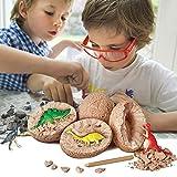 Womdee 3D Dinosaurier-Ei-Grab-Set