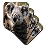 Florene animales–Koala oso closeup–Posavasos, caucho, set-of-4-Soft