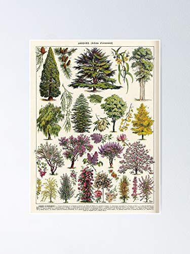 AZSTEEL Adolphe Millot - Jardin Arbres D Ornement 02 Vintage French Botanical Illustration Poster