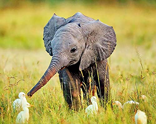 Zeyevan DIY Diamond Painting Pato elefante Por Número Kit, 5D Punto De Cruz Diamante Pintura Pradera animal Bordado Artes Kit De Punto De Cruz Para Decoración De La Pared Del Hogar 30x40cm